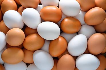 بيض تصدير بيض احمر وابيض عالى الجودة