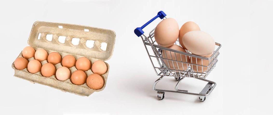 فكرة مشروع توزيع البيض